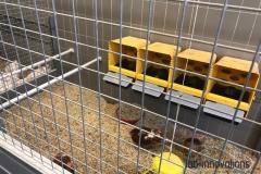 Inrichting-kippenkooien